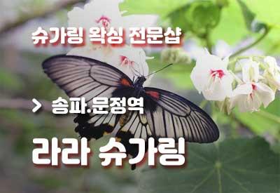 송파-왁싱샵-라라슈가링.jpg